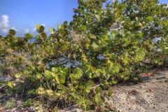 Biscayne park narodowy, Południowy Floryda Zdjęcie Royalty Free