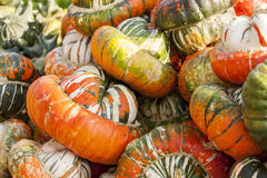 Bischofsmütze Turk Turban cucurbita pumpkin pumpkins from autum Royalty Free Stock Photography