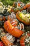 Bischofsmütze Turk Turban cucurbita pumpkin pumpkins from autum Stock Image