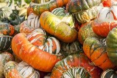 Bischofsmütze Turk Turban cucurbita pumpkin pumpkins from autum Royalty Free Stock Photography