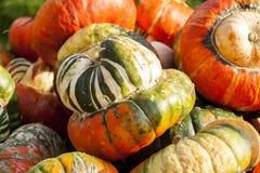 Bischofsmütze Turk Turban cucurbita pumpkin pumpkins from autum Royalty Free Stock Images