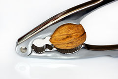 Biscoito da porca Foto de Stock