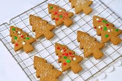Biscotti dell'albero del pan di zenzero Immagine Stock