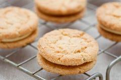 Biscotti della noce dello zenzero Fotografia Stock