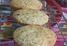 Biscotti di zucchero di recente al forno sullo scaffale di raffreddamento Fotografia Stock
