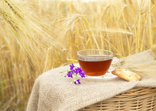 Biscotti e tazza casalinghi di tè Fotografia Stock