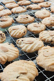 Biscotti freschi deliziosi del ribes e della mandorla Fotografie Stock