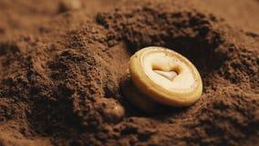 Biscotti rotondi con una forma del cuore nel mezzo che cade nella polvere di cacao video d archivio