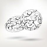 Biscotti semplici di vettore del disegno a penna con i dadi Immagini Stock Libere da Diritti