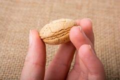 Biscuit d'amande turc sur une toile de toile Image stock