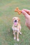 Biscuit de chien pour la formation Photos stock