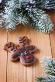 Biscuit de renne Photos libres de droits