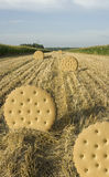 Biscuit field Stock Photos