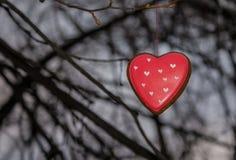 Biscuit rouge en forme de coeur sur l'arbre Images libres de droits