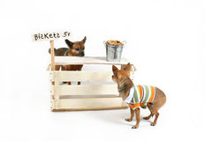 Biscuit stand. A dog selling biscuits to another dog Royalty Free Stock Images