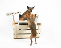 Biscuits. Two dogs at a biscuit stand Stock Photography