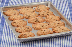 Biscuits cuits au four chauds Photo stock