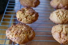 Biscuits de molasse Photos stock