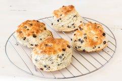 Biscuits faits maison photos libres de droits