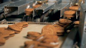 Biscuits move from an assembly line at a factory. 4K.