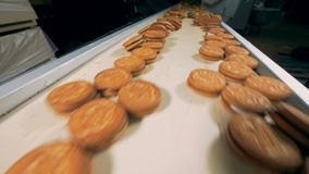 Biscuits are moving on the conveyor close view . stock footage