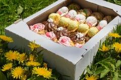 Biscuits sur un pissenlit Images stock