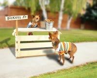 Biskuitstandplatz Lizenzfreies Stockfoto