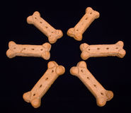 biskwitowy okręgu pies Fotografia Royalty Free