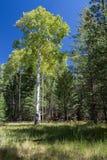 Bismarck湖足迹在北亚利桑那 图库摄影
