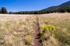 Bismarck湖足迹在北亚利桑那 免版税库存图片