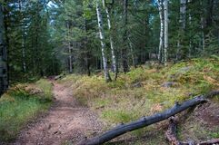 Bismarck Lake Trail Stock Photography