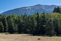 Free Bismarck Lake Trail In Northern Arizona. Stock Images - 77997434
