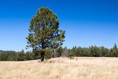 Free Bismarck Lake Trail In Northern Arizona. Stock Photos - 77998493