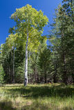 Bismarck Lake Trail in Northern Arizona. Stock Photography