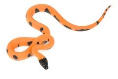 Bismark ringed python royalty free stock photography