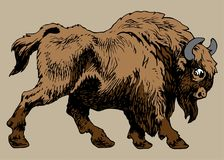 BISON ANIMAL. Large hoofed mammal of the family of the bulls Stock Images