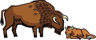Bison avec le veau illustration libre de droits