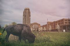 Bison Buffalo Central Station Royalty Free Stock Image