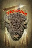 Bison Bull Head con Eagle Feathers Imagenes de archivo