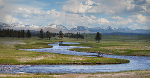 Bison chez Yellowstone image libre de droits