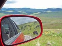 Bison dans le miroir de vue arrière Photos stock