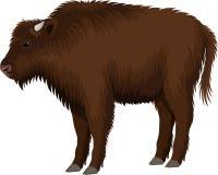 Bison de buffle de zubr de brun d'enfant d'enfant de vecteur illustration libre de droits