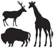 Bison, Deer and Giraffe, wild animal Royalty Free Stock Photo