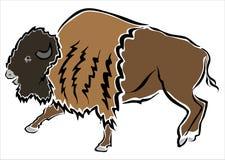 Bison eller buffel Royaltyfri Foto