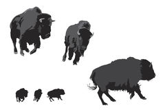 Bison galloping Royalty Free Stock Photography