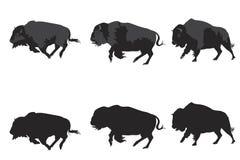 Bison galloping Royalty Free Stock Image