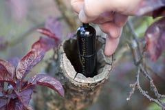 Bison-Gefäß-Cache in einem Baum stockfotos