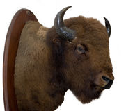 Bison Head Royalty Free Stock Images