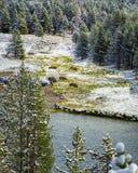 Bison Herd auf Yellowstone River Stockbilder