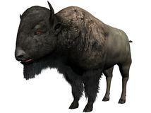 Bison illustration. Three dimensional rendering of a bison.  Isolated against a white background Stock Image